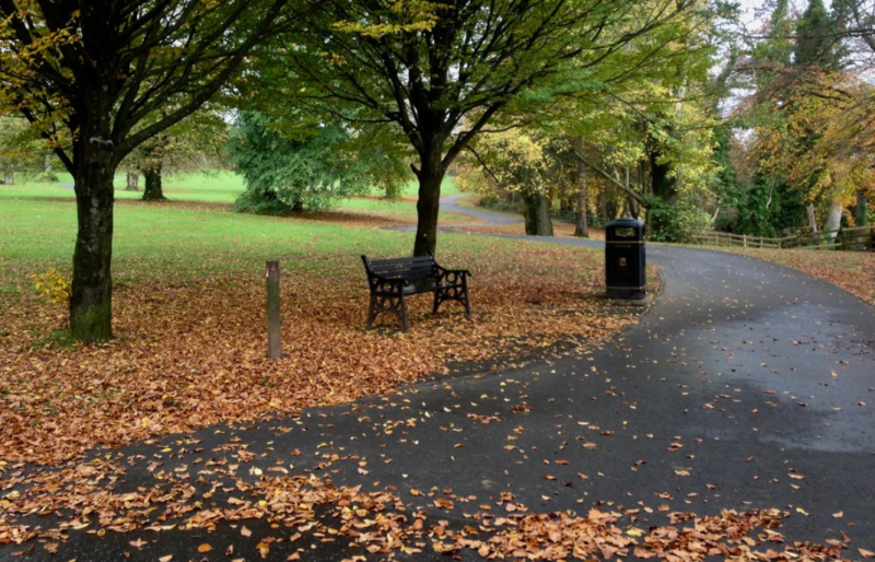 Fallen Leaves on the park