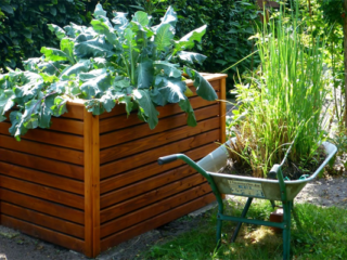 Vegetable Garden Raised Bed